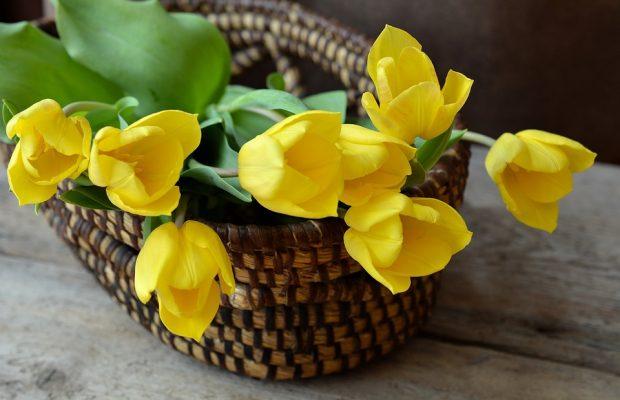 tulips-708410_960_720
